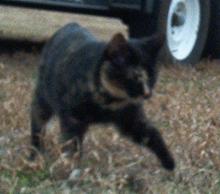 stripycat.jpg